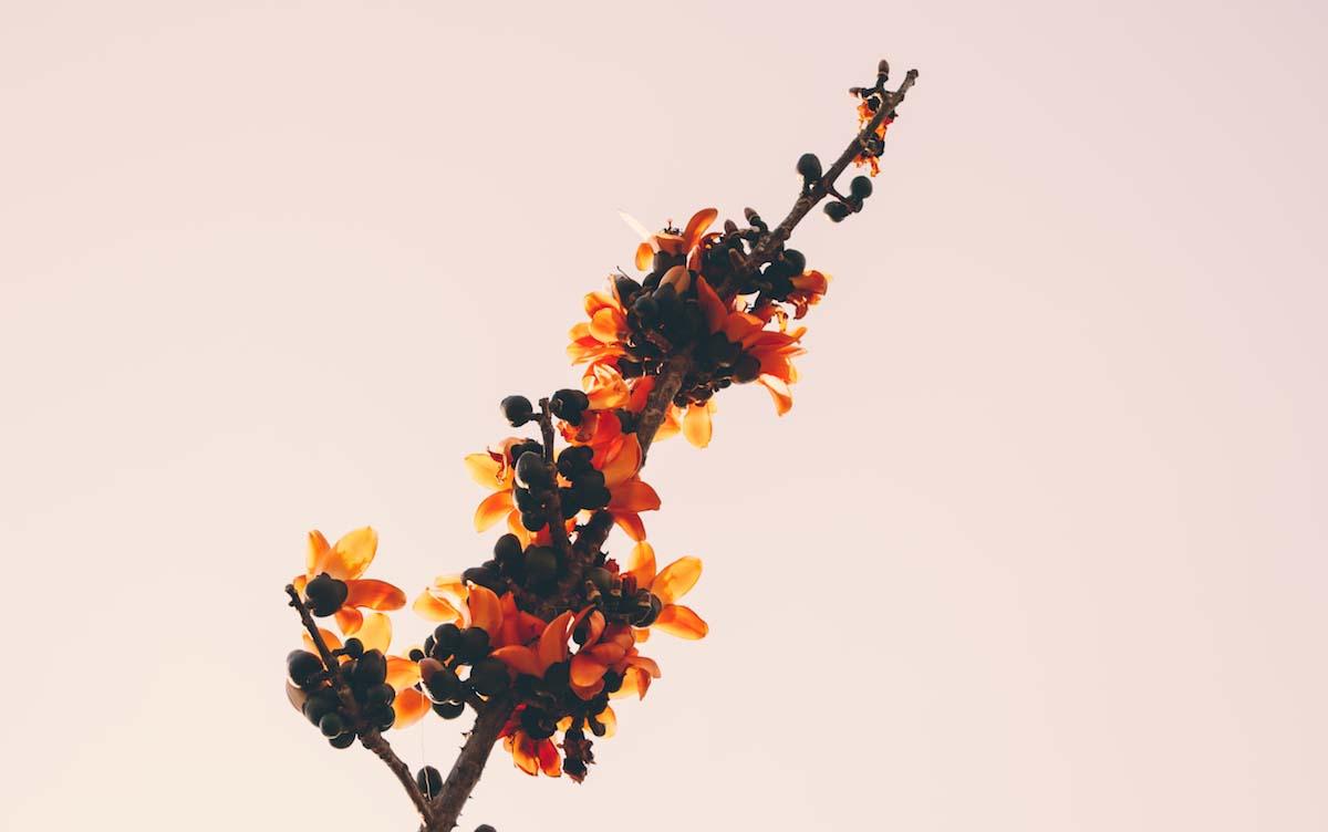 new-branch-photo